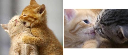 205cute kittens0