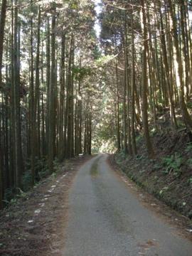 前日光サイクリング その1(大荷場木浦沢林道)8