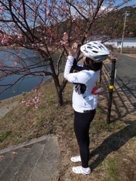 南伊豆サイクリング(その2)3