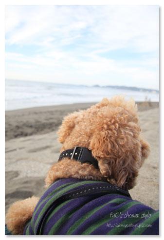 千葉,鴨川,犬