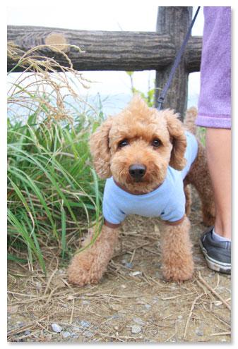 立石公園,横須賀,犬