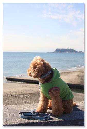 七里ヶ浜,ダブルドアーズ,犬
