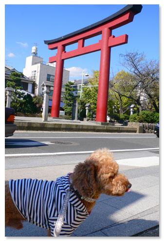 鎌倉,散策,犬