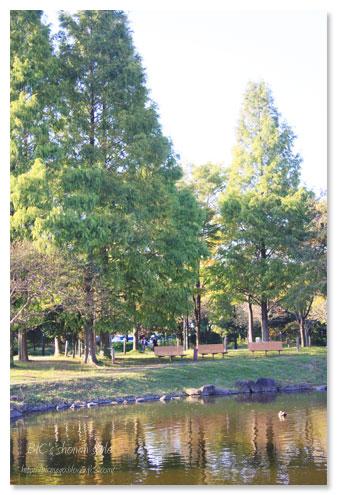 春日部,公園