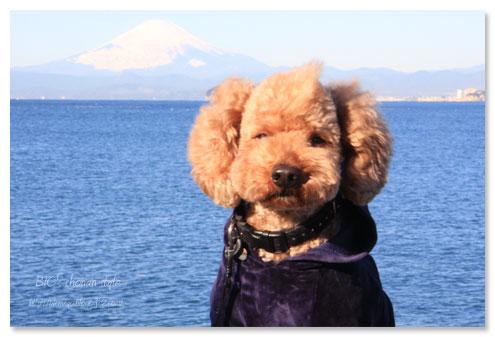 富士山,逗子海岸