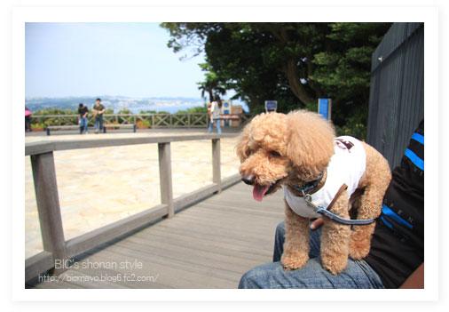 ロンカフェ、江ノ島