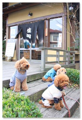 伊豆高原,生田,犬