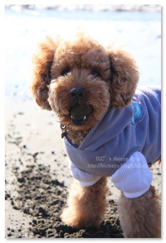 菊水亭,犬