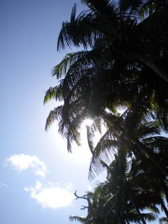 20100206ocean4.jpg