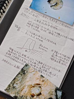 akeno70line.jpg