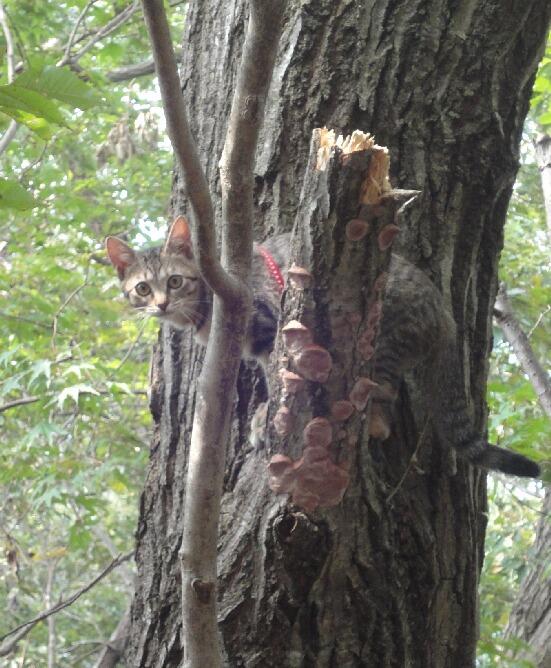 木の上で固まる