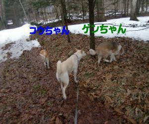 CIMG3810_convert_20100301102331.jpg