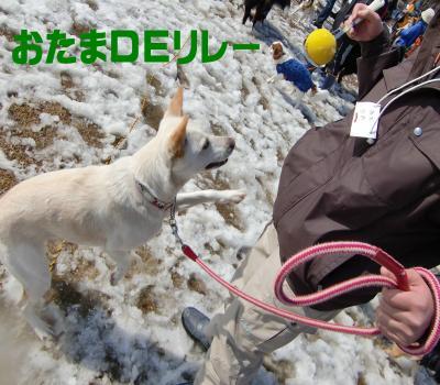 CIMG3945_convert_20100302200944.jpg