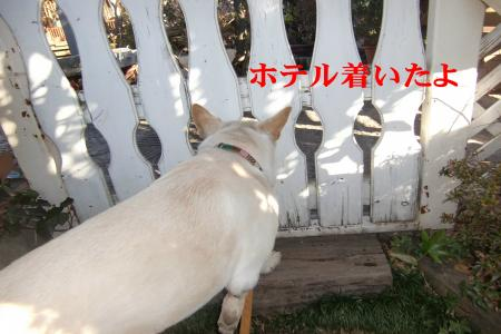 CIMG9519_convert_20110111072311.jpg