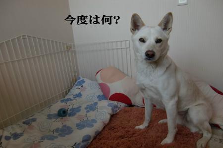 CIMG9570_convert_20101209163944.jpg