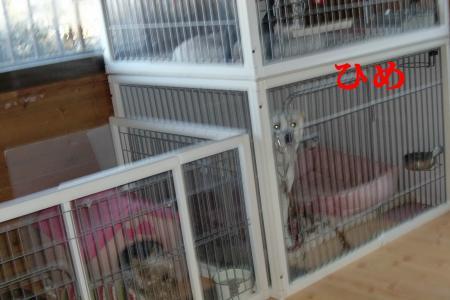 CIMG9573_convert_20110112195742.jpg