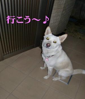 CIMG9752_convert_20110121165651.jpg