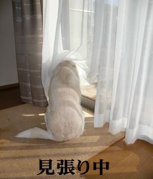CIMG9809_convert_20110126170922.jpg