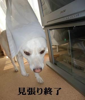CIMG9810_convert_20110126170958.jpg