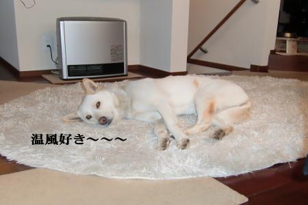 CIMG9859_convert_20110131101930.jpg