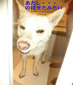 CIMG9987_convert_20110105190907.jpg