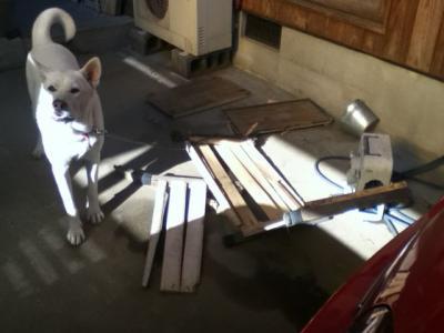 こた犬小屋破壊