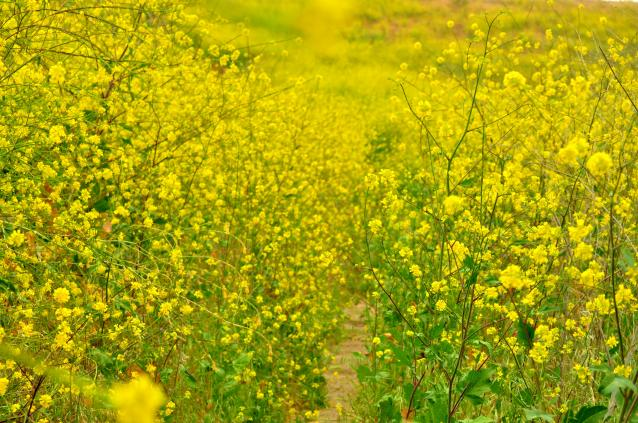 Yellow path-03