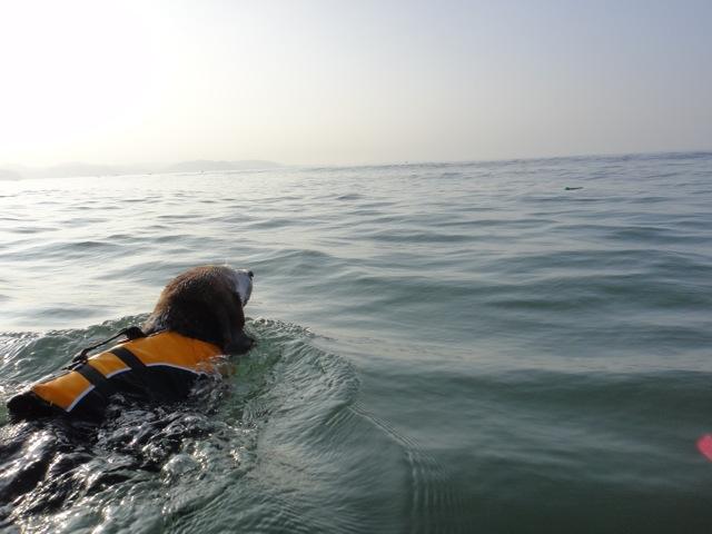 20100821七里swim5