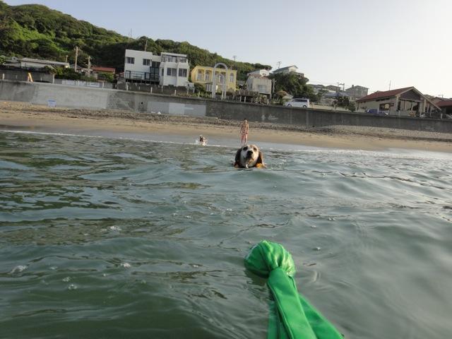 20100821七里swim4