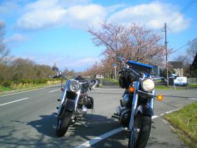7桜ロード