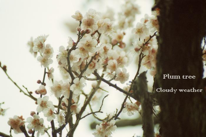 Plumtree.jpg