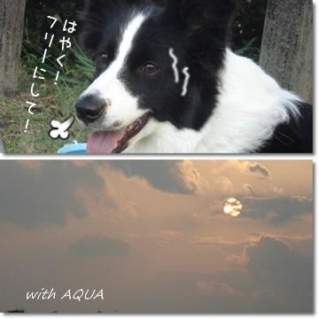aq111010.jpg