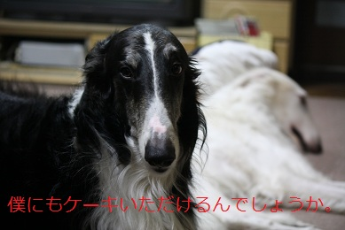 2011.02.08  (4)