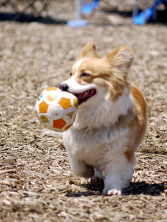 ボールじょうず