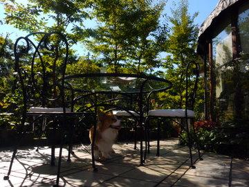 AZUREMOONのお庭