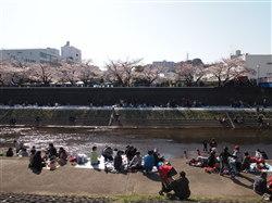 4月8日お花見2