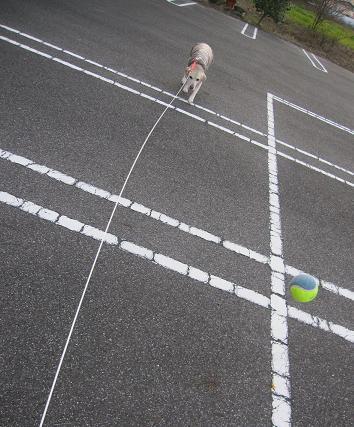 201002032いぶきとボール