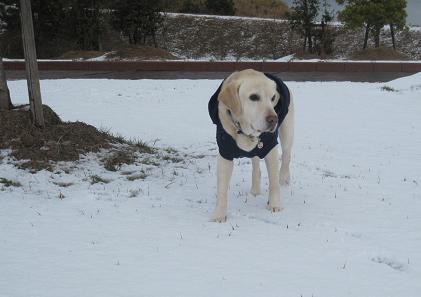 201002066積雪記念