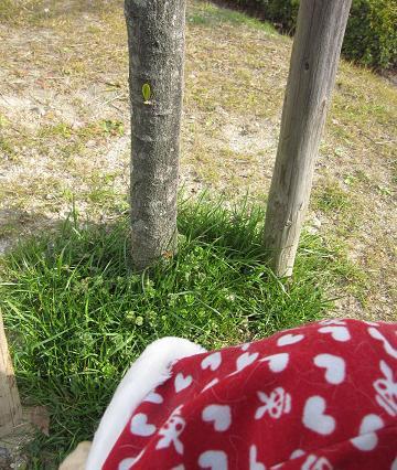 201003283いぶきが見つけた春
