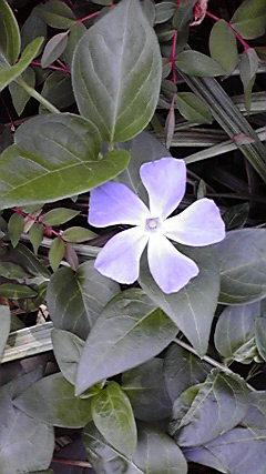 0110flower1.jpg