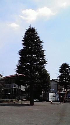 0411tree1.jpg