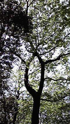 0430tree2.jpg