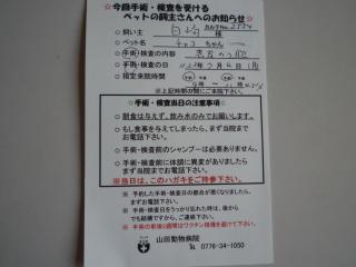 dc070505.jpg