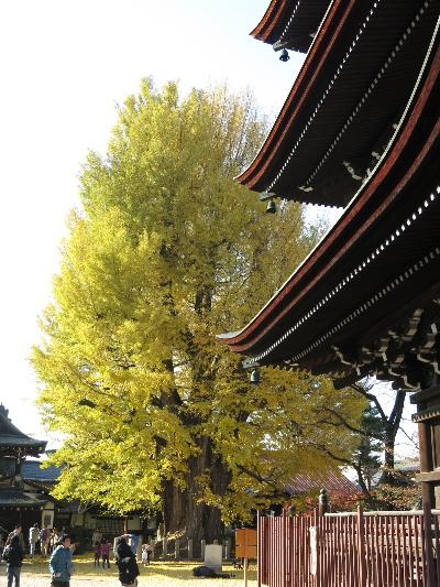 kokubunji20133.jpg