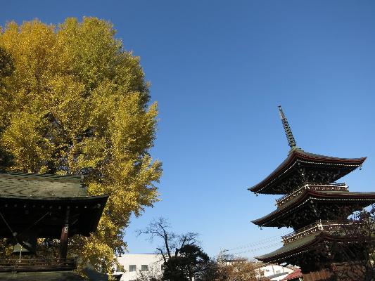 kokubunji20134.jpg