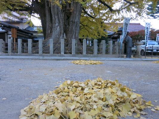 kokubunji2013a.jpg