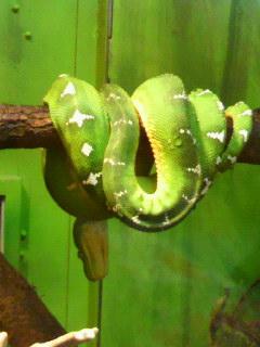 日本平動物園 へび 緑