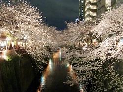 目黒夜桜2