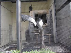 1.日本平動物園②