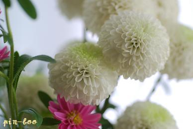 3.17花